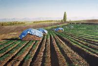 水彩画 空と畑とビニール帽子 02488000031| 写真素材・ストックフォト・画像・イラスト素材|アマナイメージズ