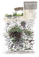水彩スケッチ 花壇と野花