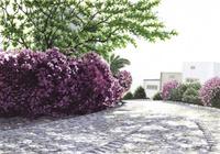水彩画 花と石畳の道