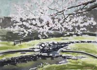 公園の桜02