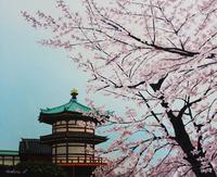 公園の桜03 02488000063| 写真素材・ストックフォト・画像・イラスト素材|アマナイメージズ