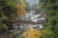 祖谷のかずら橋と紅葉 02510001051  写真素材・ストックフォト・画像・イラスト素材 アマナイメージズ