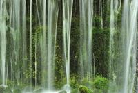 新緑の白糸の滝