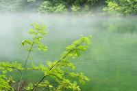霧が流れる龍ヶ窪の池