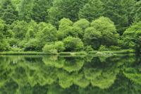 新緑の竜ヶ沢ダム