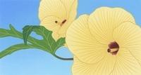芙蓉の花 02518000032| 写真素材・ストックフォト・画像・イラスト素材|アマナイメージズ