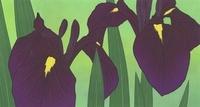 菖蒲 02518000036| 写真素材・ストックフォト・画像・イラスト素材|アマナイメージズ