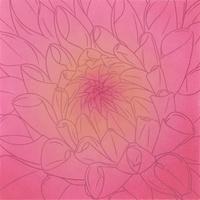 菊の花 02518000042| 写真素材・ストックフォト・画像・イラスト素材|アマナイメージズ