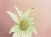 白い花 02518000043| 写真素材・ストックフォト・画像・イラスト素材|アマナイメージズ