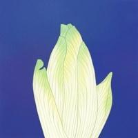チコリ 02518000058| 写真素材・ストックフォト・画像・イラスト素材|アマナイメージズ