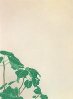 グリーン 02518000064| 写真素材・ストックフォト・画像・イラスト素材|アマナイメージズ