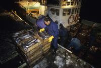日没後にスケソウダラを満載して帰ってきた延縄漁船