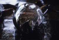 塩釜港魚市場のメバチマグロ