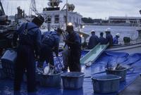 塩釜港へマグロを水揚げする漁師たち