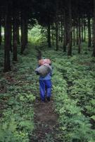 収穫されたワラビを風呂敷に包み運ぶ人