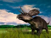 草原のズニケラトプス