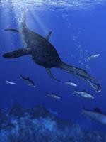 海中のドリコリンコプス