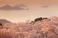 紫雲出山の桜と瀬戸内海の夕景