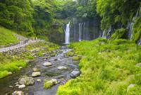 白糸の滝 02583003949| 写真素材・ストックフォト・画像・イラスト素材|アマナイメージズ