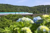 走行中の北海道新幹線E5系