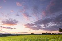 菜の花畑の夕日