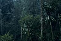 ブウィンディの高山性熱帯雨林