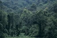 鬱蒼と茂るブウィンディの熱帯雨林