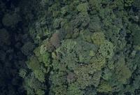 フタバガキが高く目立つ東南アジアの熱帯雨林