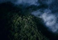 キナバル山の標高1500?2000mの山地林