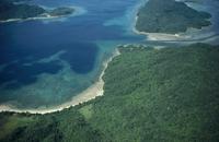 西表島のマングローブ群落
