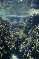 白保のサンゴ礁