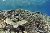 サンゴ礁 02599000786| 写真素材・ストックフォト・画像・イラスト素材|アマナイメージズ