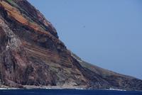 鳥島の周りを飛ぶアホウドリ
