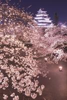 桜咲く鶴ヶ城のライトアップ