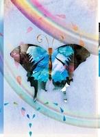 チョウ 02619000002| 写真素材・ストックフォト・画像・イラスト素材|アマナイメージズ