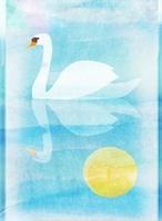 スワン 02619000018| 写真素材・ストックフォト・画像・イラスト素材|アマナイメージズ