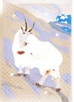 シロイワヤギ 02619000021| 写真素材・ストックフォト・画像・イラスト素材|アマナイメージズ