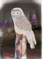 フクロウ 02619000031| 写真素材・ストックフォト・画像・イラスト素材|アマナイメージズ