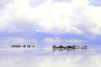 ウユニ塩湖と車列