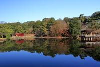 奈良県 紅葉の奈良公園 鷺池と浮見堂