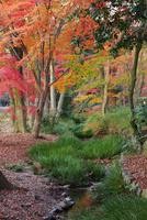下鴨神社 糺の森の紅葉