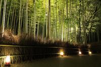 嵐山 竹林の道 花灯路