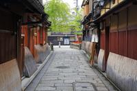 京都 新緑の祇園白川
