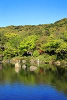 京都 新緑の円山公園