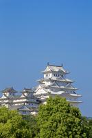 新緑と姫路城