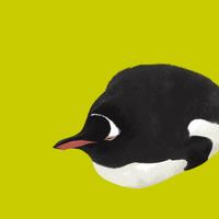 うつ伏せで眠るジェンツーペンギン