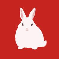 赤い背景の白ウサギ