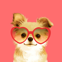 ハートのサングラスをかけたチワワ