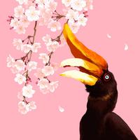 サイチョウと枝垂桜