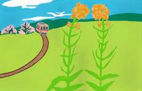 菜の花畑 02650000006| 写真素材・ストックフォト・画像・イラスト素材|アマナイメージズ
